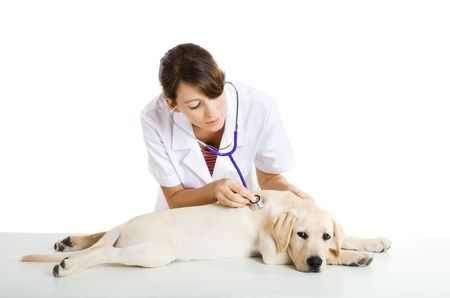 Young female veterinary taking care of a beautiful labrador dog Stock Photo - 5979112