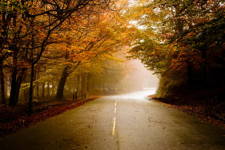 Autumn landscape with a beautiful road with colored trees photo