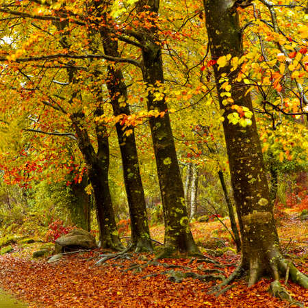 Autumn landscape with beautiful colored trees photo