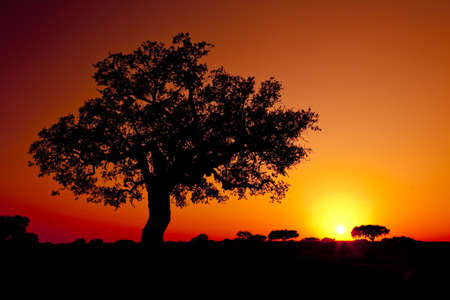 red sunset: Beautiful landscape image with trees silhouette at sunset - Alentejo, Portugal