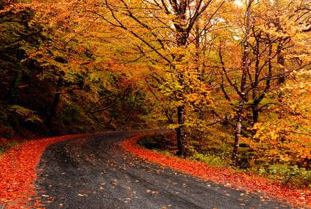 Paisaje de oto�o con una hermosa carretera con �rboles de colores Foto de archivo - 8086321