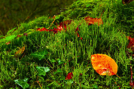 green vegetation: Beautiful green vegetation with orange leafs