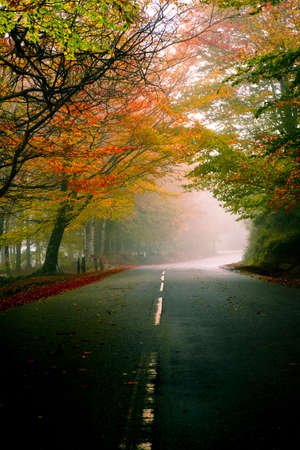 Autumn landscape with a beautiful road with colored trees