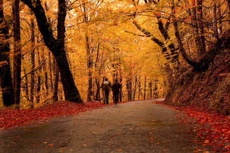autumn leafs: Two people walking on a beautiful road with colored trees