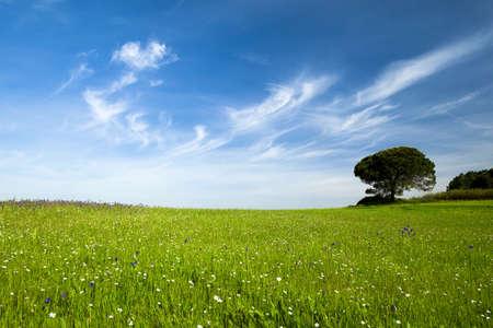 paisaje rural: Hermosa pradera verde con un gran cielo azul Foto de archivo