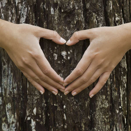 felling: Female hands making an heart shape on a trunk of a tree. Great ecology concept