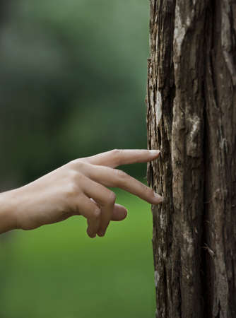 wood textures: Female hand walking over a trunk of a tree. Great ecology concept Stock Photo