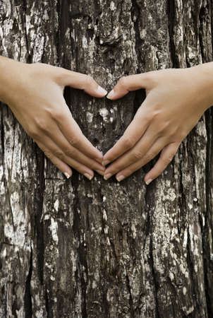 tree felling: Female hands making an heart shape on a trunk of a tree. Great ecology concept