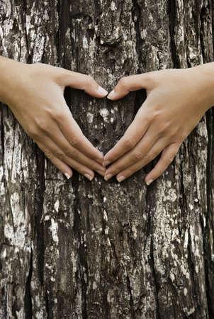 cuore in mano: Mani femminili facendo un forma di cuore su un tronco di un albero. Grande concetto di ecologia
