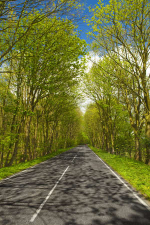 Beautiful road in the middle of beautiful trees Stock Photo - 14944075
