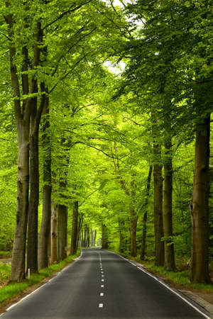Beautiful road in the middle of beautiful trees photo