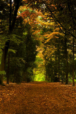 Beautiful track in the middle of a forest during the fall season Stock Photo - 15760661