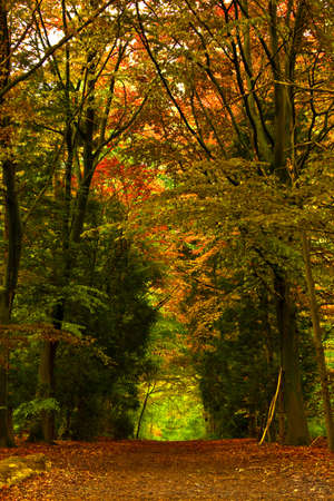 Beautiful track in the middle of a forest during the fall season Stock Photo - 17227277