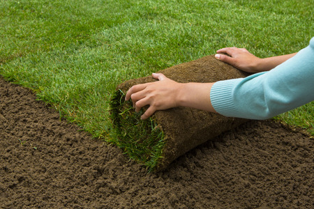 Woman applying turf rolls in the backyard Stok Fotoğraf - 38124589