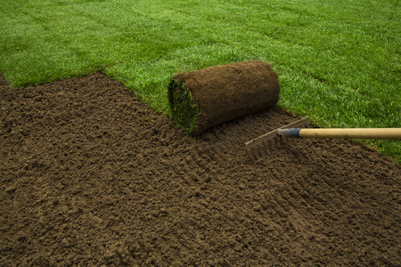 Gardener applying turf rolls in the backyard Foto de archivo