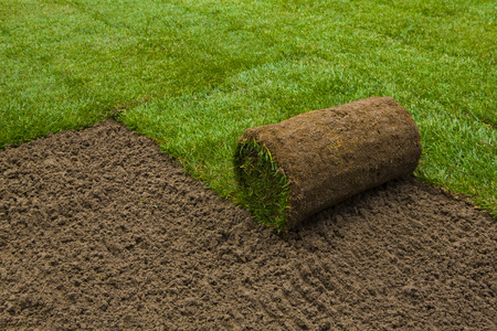 Gardener applying turf rolls in the backyard Stock Photo