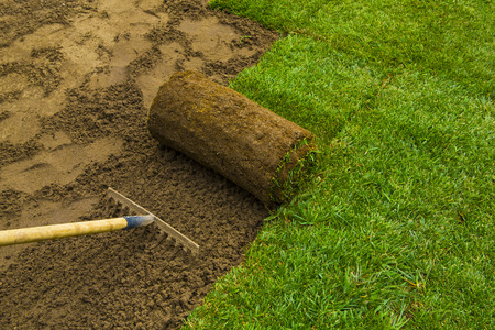 Gardener applying turf rolls in the backyard Stockfoto