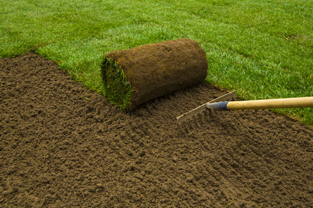 Gardener applying turf rolls in the backyard Banque d'images
