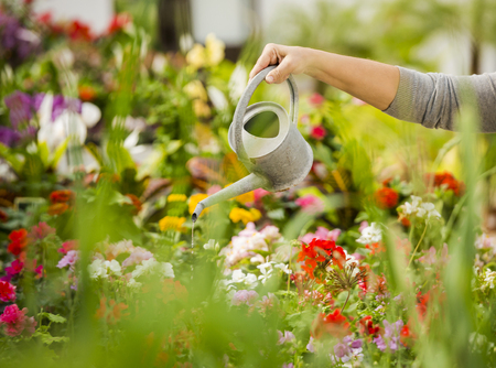 Beautiful mature woman in a garden watering flowers 스톡 콘텐츠