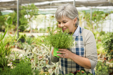Beautiful mature woman holding fresh herbs and smelling them