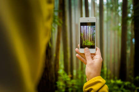 Woman taking a photo to the forest with her phone