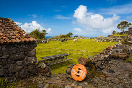 Typical rural house of Azores - Portugal with cows on the background Stock Photo