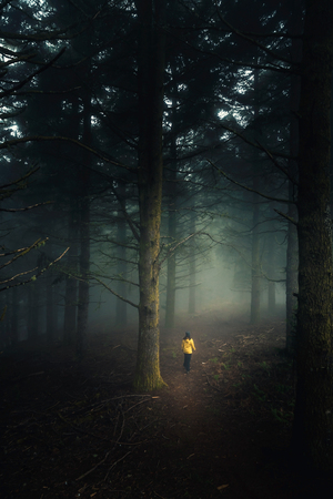 Female traveler walking in the middle of a forest on a foggy morning