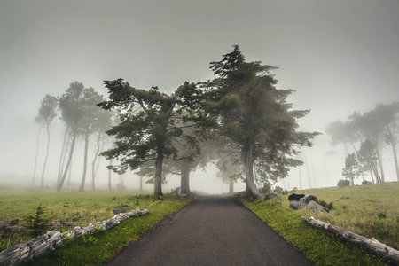 Beautiful landscape of a road on a foggy morning