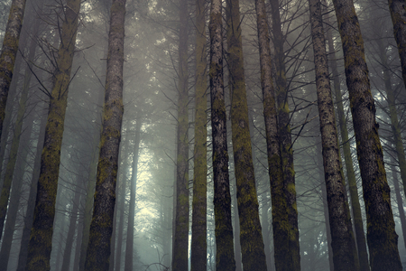 Beautiful forest landscape from Madeira Island, Portugal Imagens - 130544374