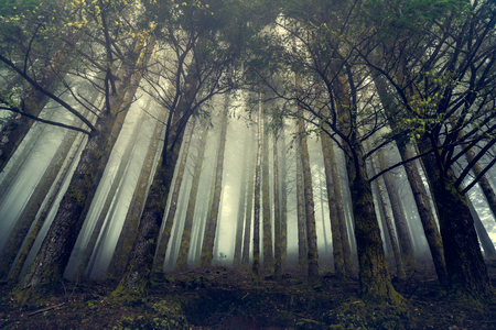 Beautiful forest landscape from Madeira Island, Portugal Imagens