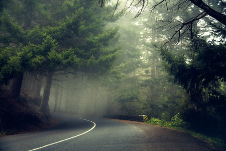 Beautiful road in the middle of a forest - Madeira, Portugal Imagens - 130544454