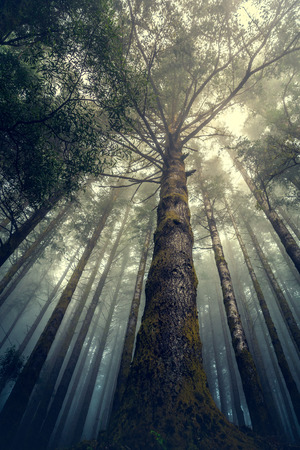 Beautiful forest landscape from Madeira Island, Portugal Imagens - 130544458