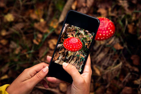 Female hands taking a picture to a mushroom Фото со стока