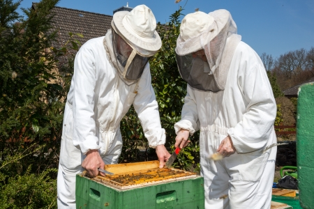 to ensure: Two beekeepers maintaining beehive to ensure health of the bee colony or honey harvest