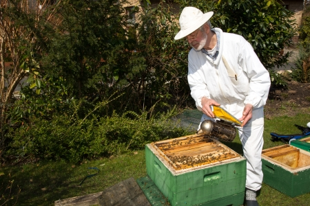 Beekeeper applying smoke to beehive to avoid being stung by bees photo