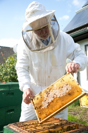 Beekeeper checking a beehive to ensure health of the bee colony or collecting honey Standard-Bild