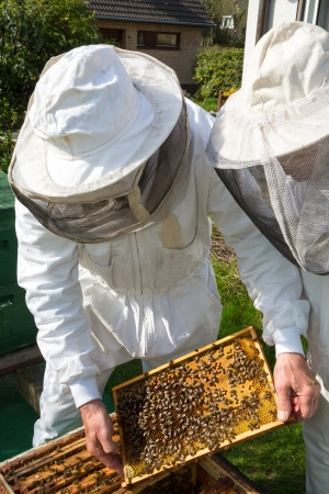 Two beekeepers maintaining beehive to ensure health of the bee colony or honey harvest photo