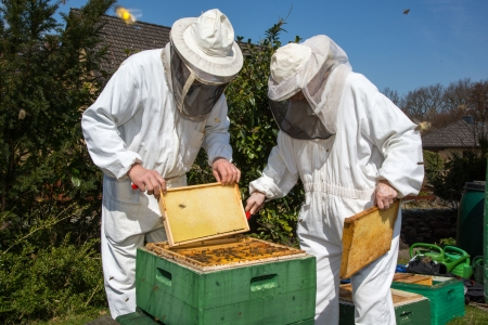 beekeeping: Two beekeepers maintaining beehive to ensure health of the bee colony or honey harvest