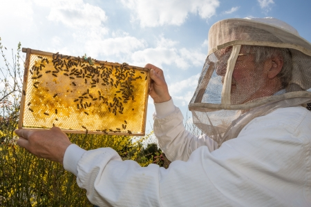 beekeeper: Beekeeper holds frame with honeycomb at bee colonyagainst the sun Stock Photo