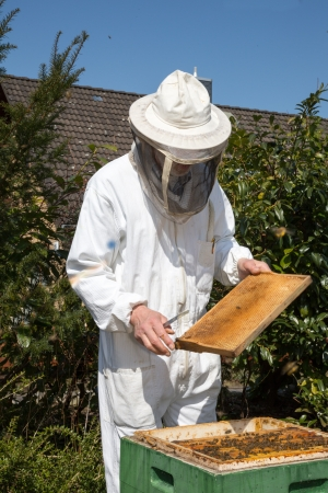 beekeeper: Beekeeper checking a beehive to ensure health of the bee colony or collecting honey Stock Photo