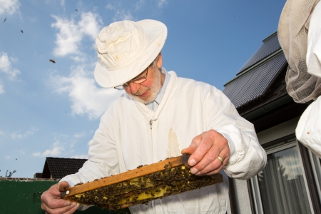 pollinator: Beekeeper checking a beehive to ensure health of the bee colony or collecting honey Stock Photo