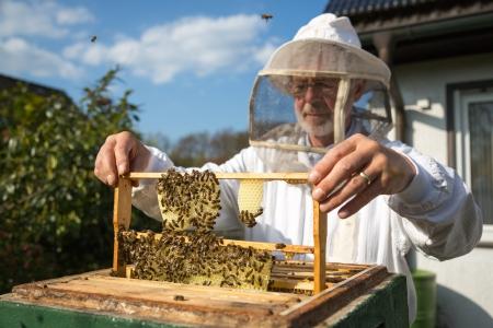 Imker Kontrolle ein Bienenstock, um die Gesundheit der Bienenvölker zu gewährleisten oder sammeln Honig Standard-Bild - 19686452