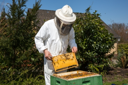 beekeeping: Beekeeper checking a beehive to ensure health of the bee colony or collecting honey Stock Photo