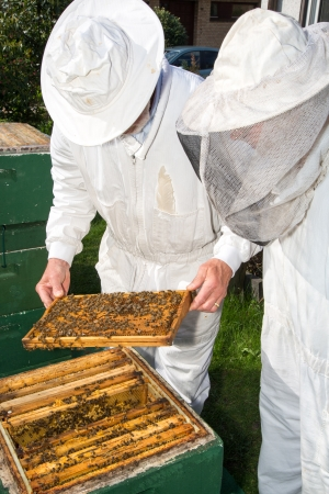apiculture: Two beekeepers maintaining beehive to ensure health of the bee colony or honey harvest