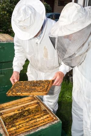Zwei Imker Aufrechterhaltung Bienenstock für die Gesundheit des Bienenvolkes oder Honig Ernte zu gewährleisten Lizenzfreie Bilder