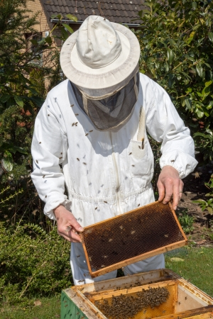 to ensure: Beekeeper checking a beehive to ensure health of the bee colony or collecting honey Stock Photo