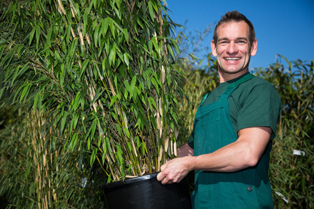 bamboo plant: Gardener posing with potted bamboo plant in nursery Stock Photo