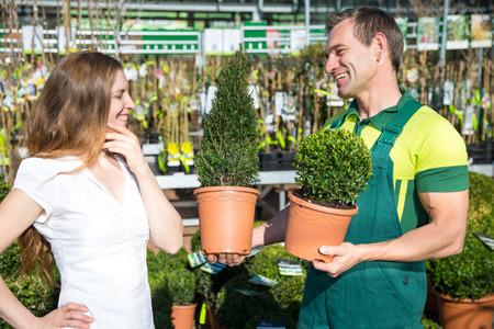 garden center: Gardener at garden center or nursery presenting different boxtrees to customer