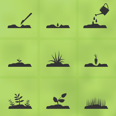 Set of garden icons, illustrating stages of growing plant from seeds  Vector