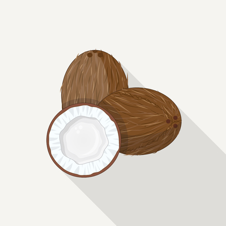 Realistic tropical coconut illustration. Half of coconut with white milk and meat and full nut with peel.